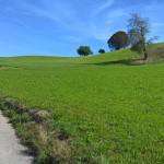 Switzerland-Borer-50th-Anniversary-Conference-trip